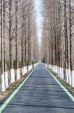 Дорога в forrest Стоковое Изображение RF