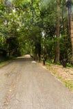 Дорога в forset, Таиланде Азии Стоковые Фотографии RF