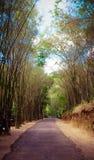Дорога в Ob-Luang Стоковые Фото