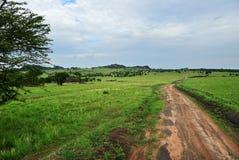 Дорога в Serengeti, Танзании стоковое фото