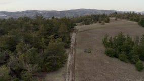 Дорога горы грязи бежит вдоль долины горы соснового леса живописной акции видеоматериалы