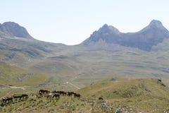 Дорога горы с дикой лошадью 001 Стоковая Фотография