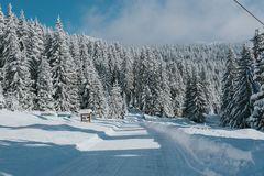 Дорога горы с покрытыми снег соснами стоковые фото