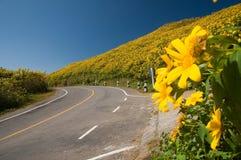 дорога горы цветка, котор нужно пожелтеть Стоковое фото RF