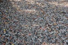 Дорога гравия в курортном поселке Стоковая Фотография RF