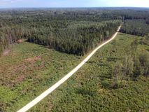 Дорога гравия в лесе лета, виде с воздуха Стоковое фото RF