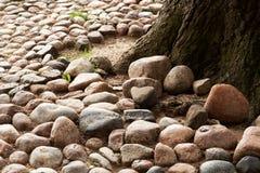 Дорога гравия и дерево Стоковое Изображение RF