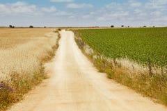 Дорога гравия между пшеницей и зеленым полем вал времени земной хлебоуборки сада яблока возмужалый Стоковые Изображения