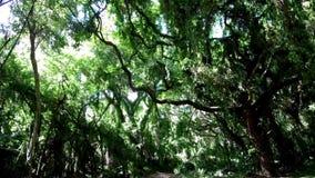 Дорога джунглей Hawai сток-видео