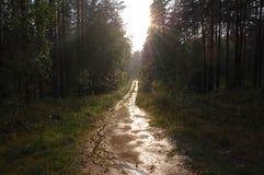 дорога дождя Стоковое Изображение