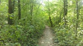 Дорога древесин Стоковая Фотография