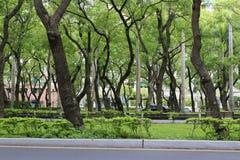 Дорога дерева камфоры Стоковые Изображения RF