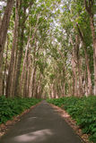 Дорога дерева Стоковые Изображения