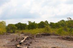 Дорога деревни сделанная деревянных планок стоковые фото