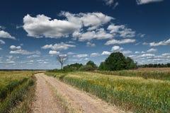Дорога деревни Стоковое Изображение