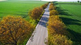 Дорога, деревья переулок и поля от взгляд сверху Стоковые Изображения RF