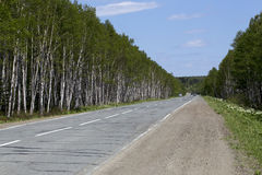 Дорога леса белой березы Стоковые Изображения RF