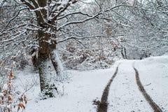 Дорога леса в зиме Стоковые Фотографии RF