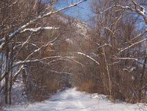Дорога леса в после полудня зимы Стоковая Фотография