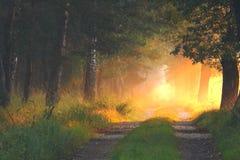 Дорога леса в лучах восходящего солнца Стоковые Фото