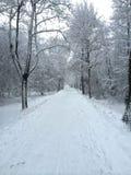 Дорога леса зимы русская Стоковое Изображение