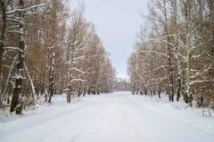 Дорога леса зимы среди покрытых снег деревьев стоковое изображение rf