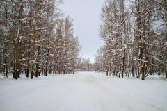 Дорога леса зимы среди покрытых снег деревьев стоковые изображения