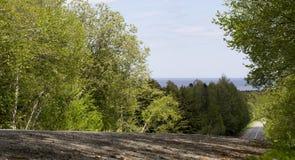 Дорога леса к морю Стоковая Фотография RF