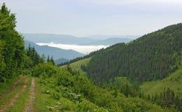 Дорога леса над облаками Стоковые Фото