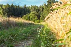 Дорога леса на ясный летний день стоковая фотография