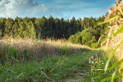 Дорога леса на ясный летний день стоковое изображение