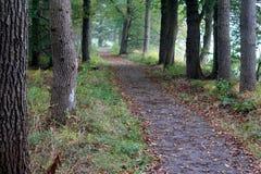 Дорога леса окруженная с дубами стоковое изображение rf