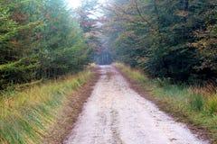 Дорога леса окруженная с дубами стоковые фото