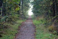 Дорога леса окруженная с дубами стоковые фотографии rf