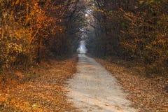 Дорога леса осени Стоковые Фотографии RF