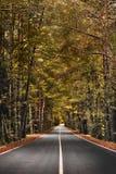 Дорога леса осени Стоковые Фото