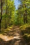 Дорога леса пакостная в лете под голубым небом Стоковое фото RF