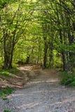 Дорога леса Стоковые Фотографии RF