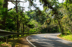 Дорога леса Стоковые Изображения RF