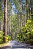 Дорога леса Стоковая Фотография