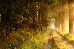 Дорога леса 3 Стоковая Фотография