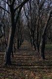 Дорога леса Стоковые Фото