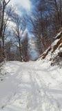 Дорога леса Snowy Стоковая Фотография