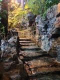 Дорога джунглей стоковая фотография