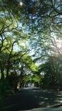 Дорога заполненная растительностью Стоковые Фотографии RF