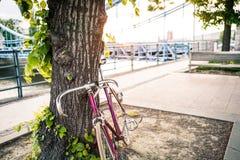 Дорога зафиксировала велосипед на улице города под деревом Стоковая Фотография RF
