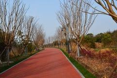 Дорога зеленого цвета озера Ухань восточная Стоковое Фото