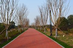 Дорога зеленого цвета озера Ухань восточная Стоковые Изображения RF