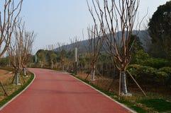 Дорога зеленого цвета озера Ухань восточная Стоковая Фотография