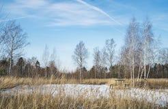 Дорога зимы в России стоковая фотография rf